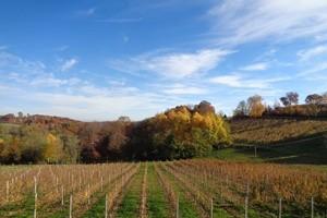 Prekopa,_Međimurje_-_vinograd